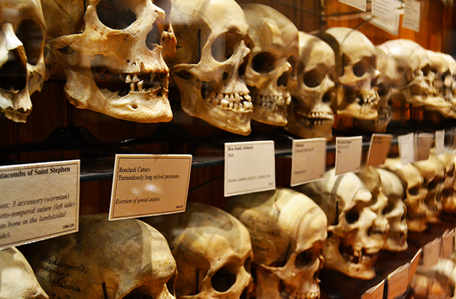 Things to do in Philadelphia - Mutter Museum