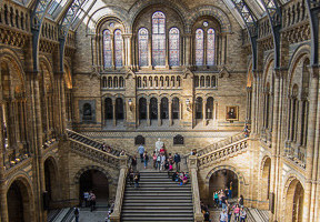 London Museums of Natural History Museum